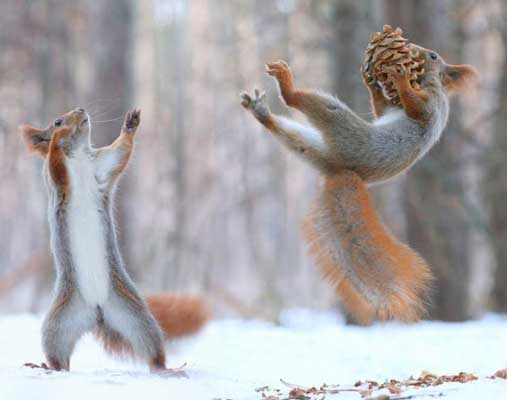 Playful squirrels